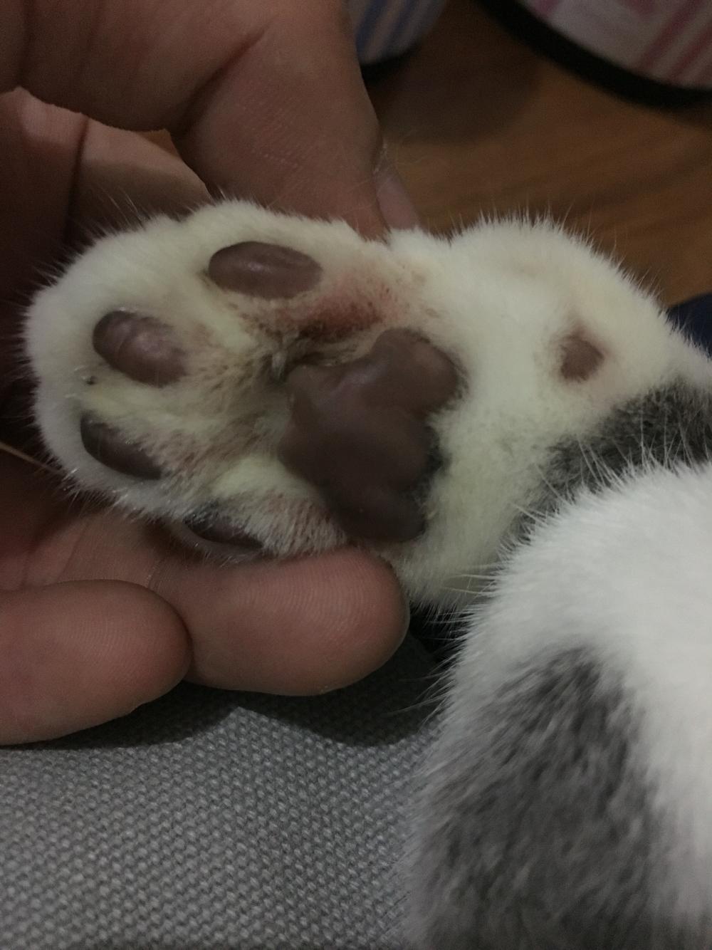 猫咪一直挠头啃脚