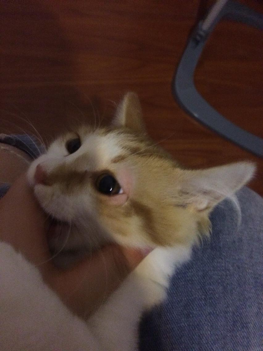 猫咪左眼肿得严重
