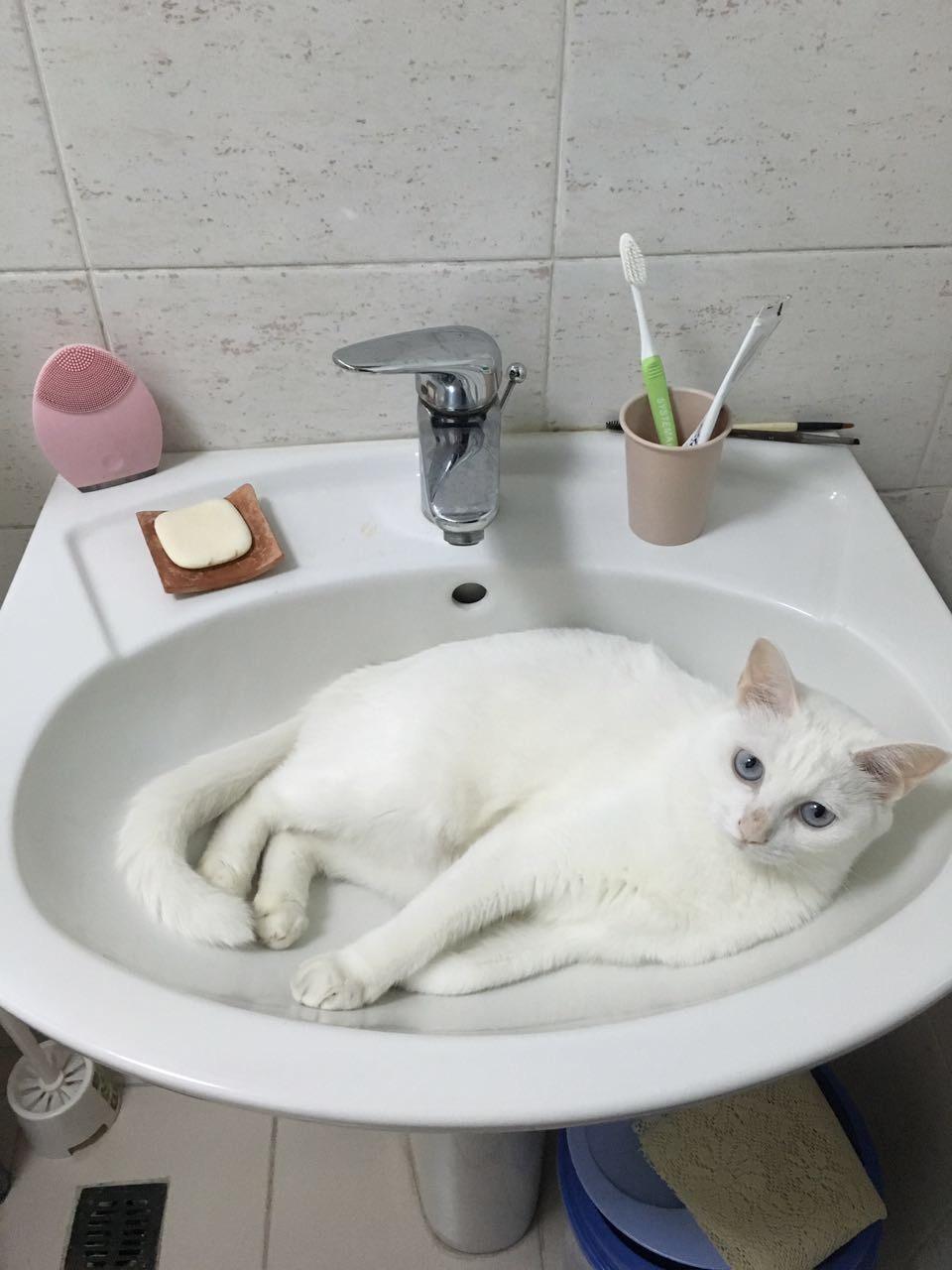 猫咪在地上蹭屁股
