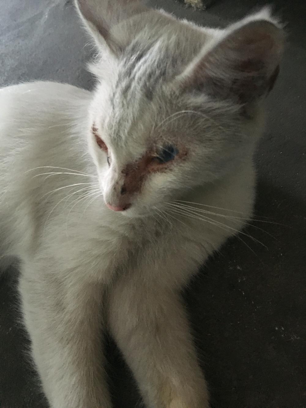 猫咪眼睛周围皮肤