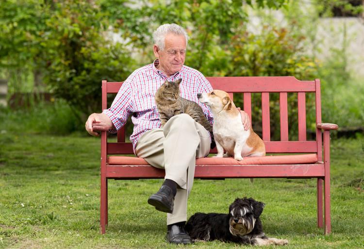 当岁月老去,宠物会记得自己的主人吗?