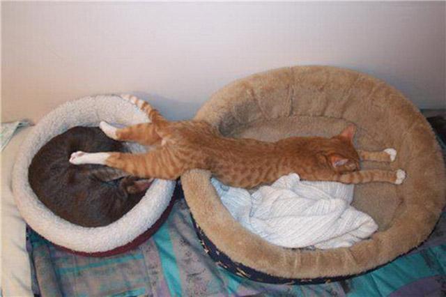 床,就是所有朕想躺的地方