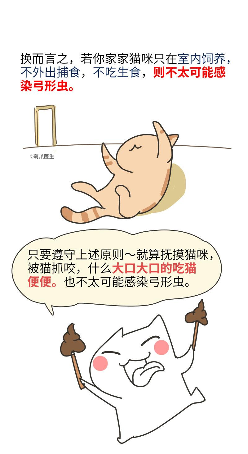 总有人说怀孕不能养宠,可他们连弓形虫是啥都不知道!
