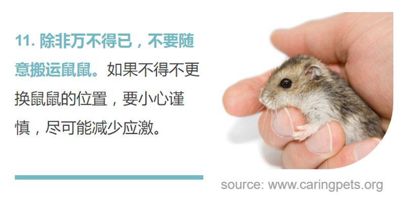 胆小如鼠,名副其实!想照顾好敏感的仓鼠,你得……