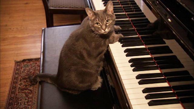 猫咪对玩具有自己的偏好,你知道吗?