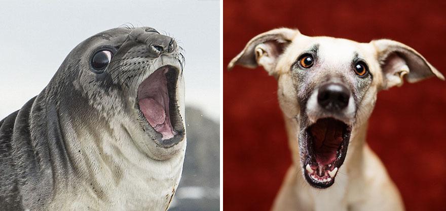 海豹海狮海狗,原来都是海中汪星人!