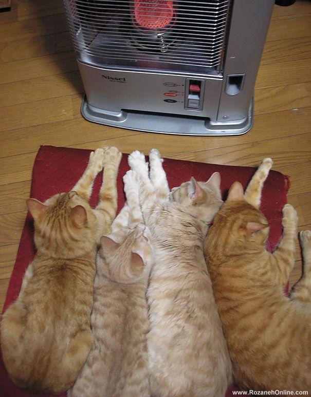 天凉了,汪喵星人如何求温暖?