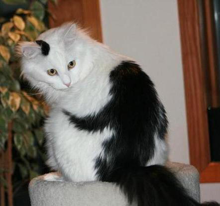 这17只猫,毛发里藏着有趣的故事