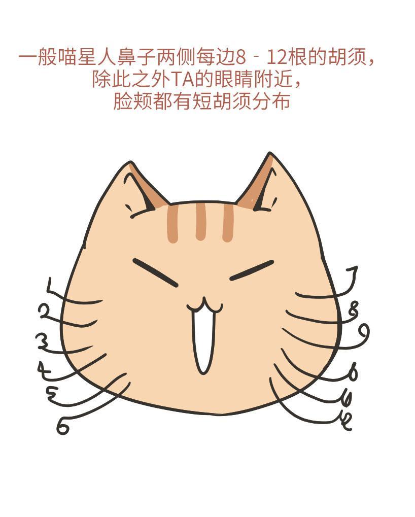 不看不知道,猫胡子竟有这么多神奇的作用!