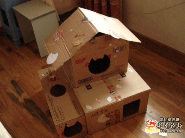 想拥有高大上的纸箱猫屋吗?
