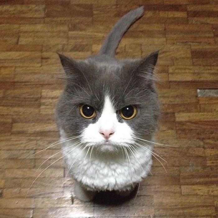 据说,在猫咪眼里你就是个行走的投食器……
