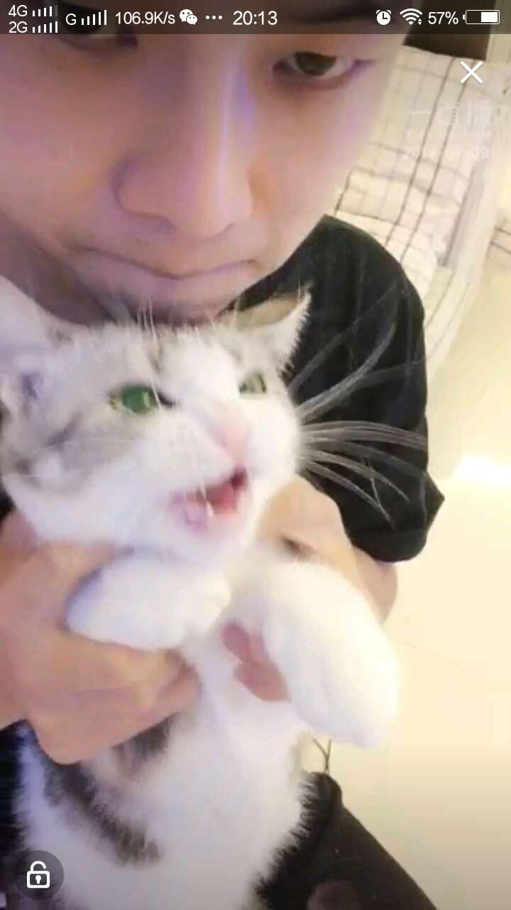 我家猫绝育后就不让我摸胸了 咋办?