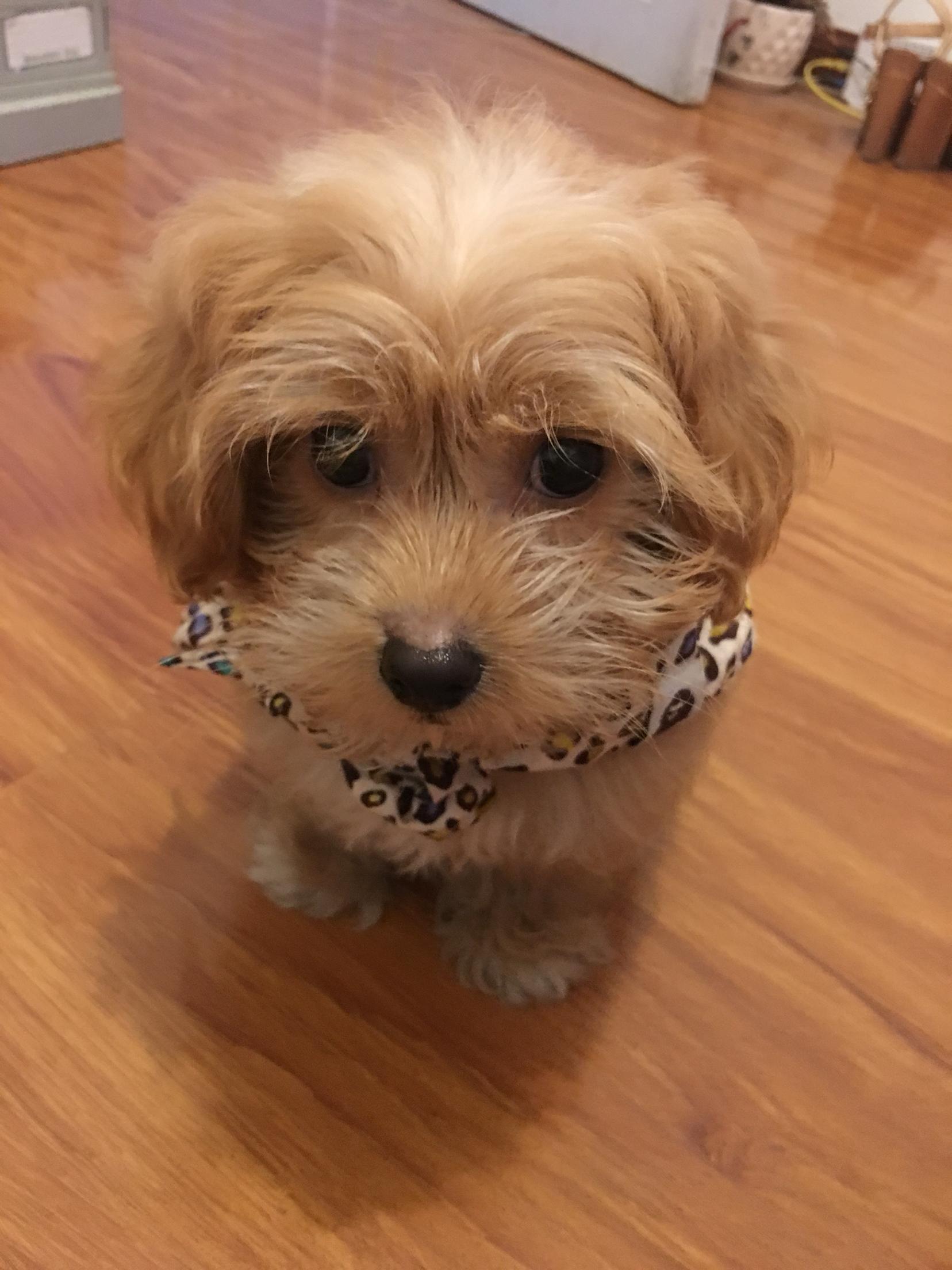 三个月的狗狗为什么鼻子边上会掉毛呢?