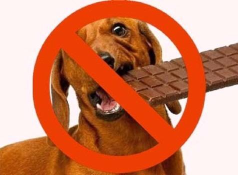 十一种不能给猫狗吃的人类食物