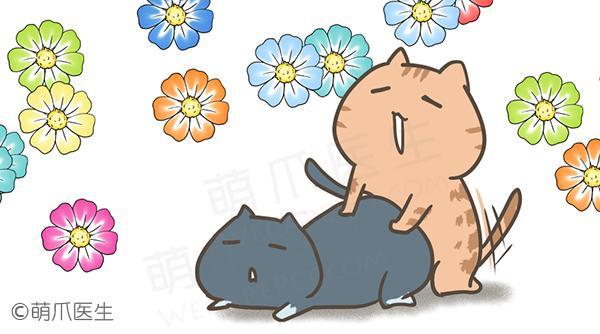 """猫咪发情及OOXX密事:想让主子今年""""生猴子""""的家长看好了!"""