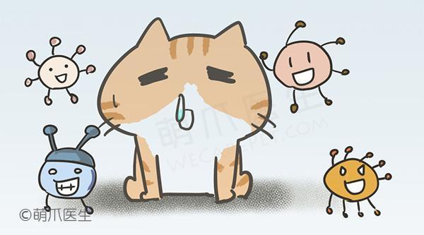 宠物频繁流鼻涕打喷嚏,你该怎么办?