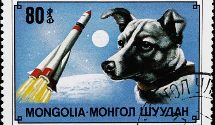 除了《忠犬八公》,你知道还有哪些故事真相?