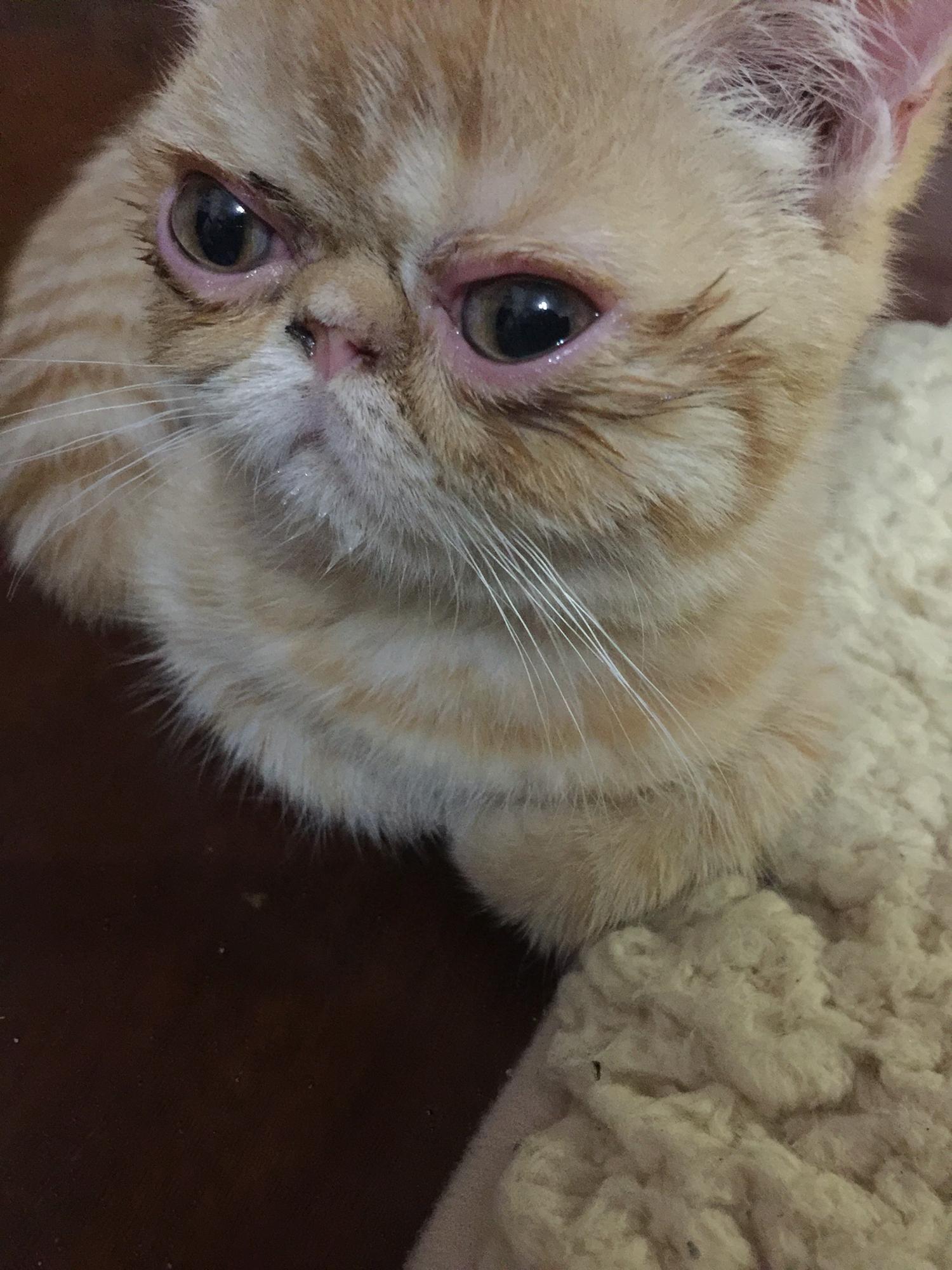 伤心带眼泪动物图片