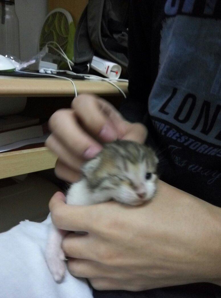 小猫刚刚开眼一天,然后第二天发现左眼睁不开,但右眼正常