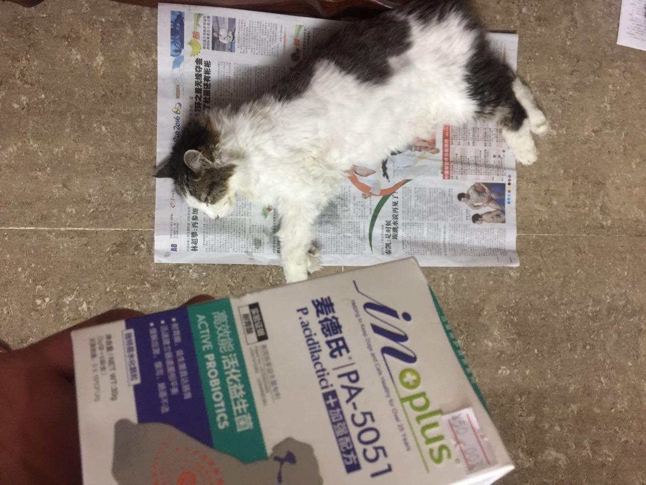 猫咪呕吐45天 不吃东西 摸肚子有鼓起来
