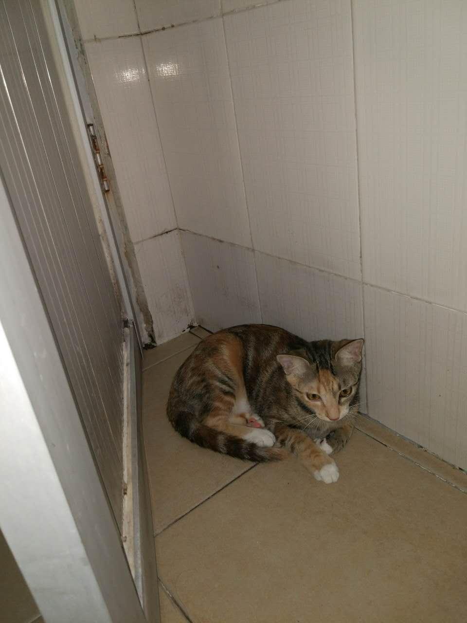 猫咪突然不吵闹
