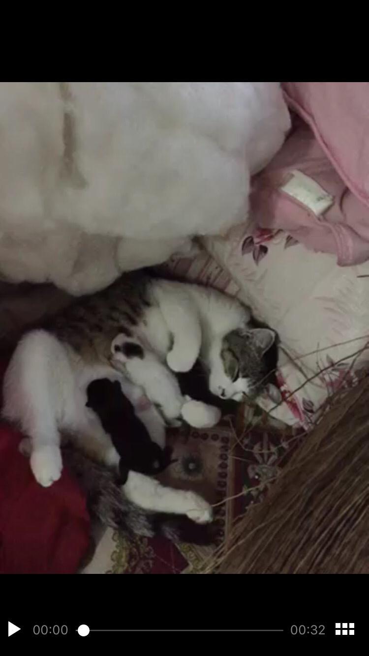 猫咪生产后该如何照顾和喂养呢?