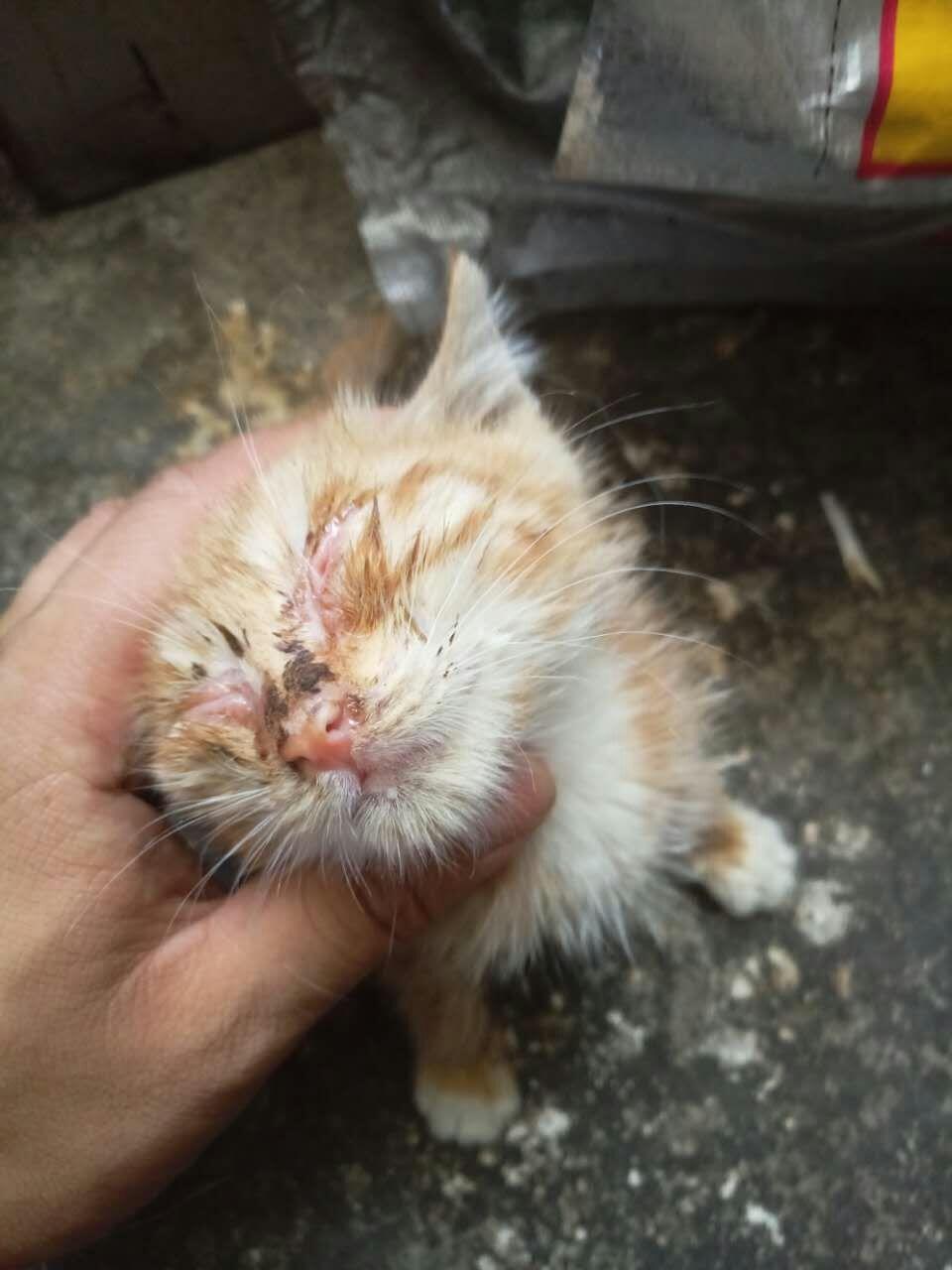 关于猫咪眼病的问题