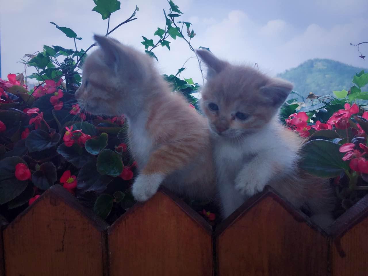 奶猫救助后放养要做哪些必要准备?
