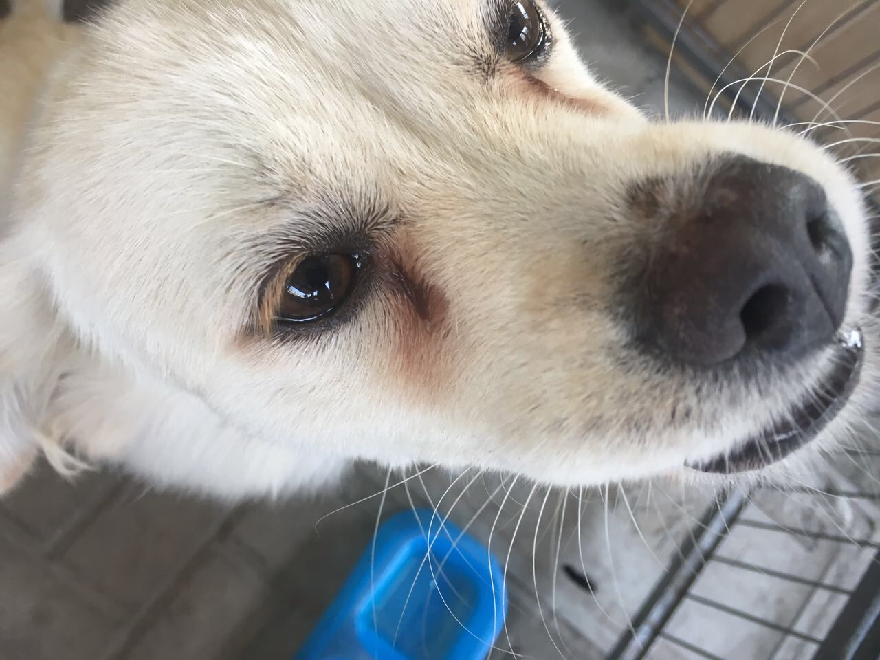 狗狗暴瘦 骨瘦嶙峋的病因?