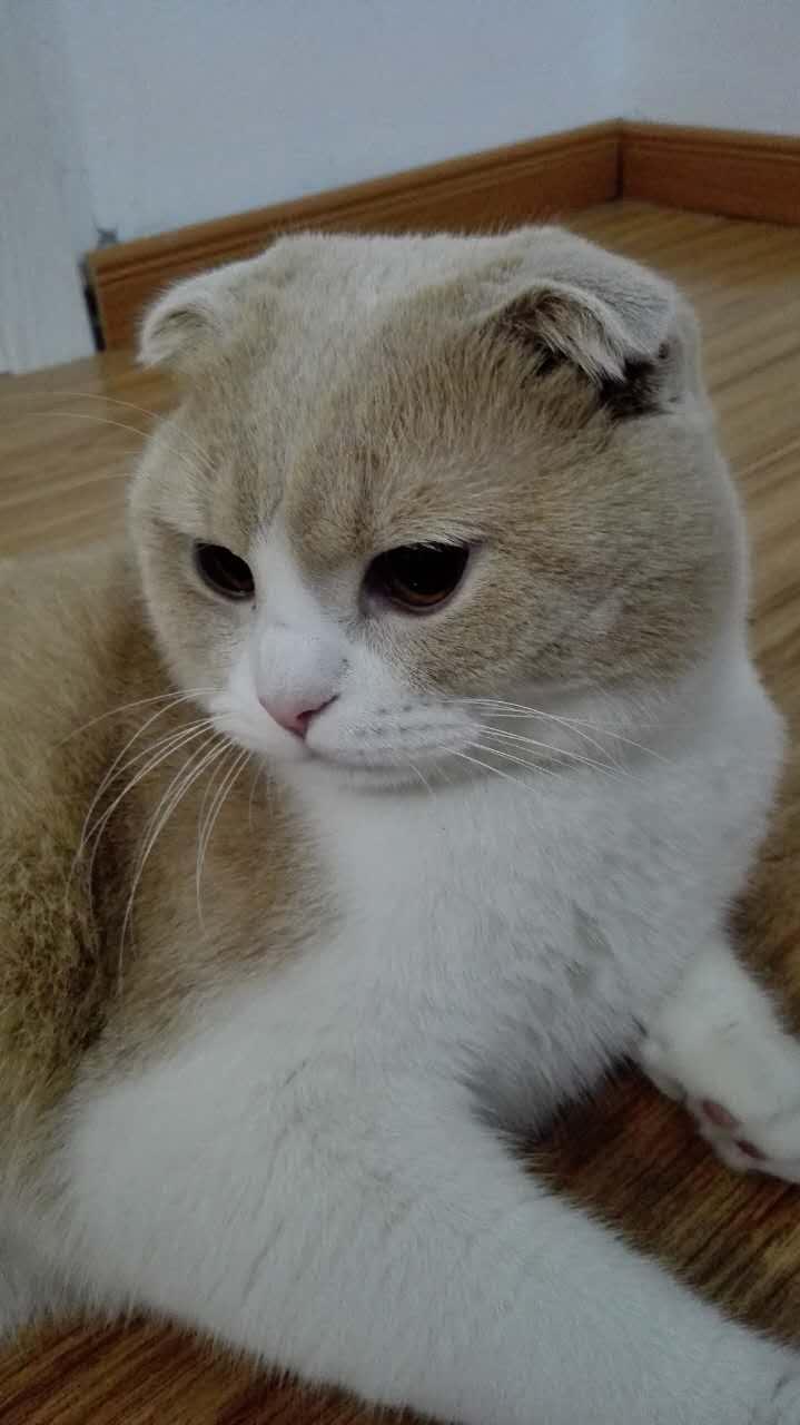 猫的耳朵很热,是否发烧了?