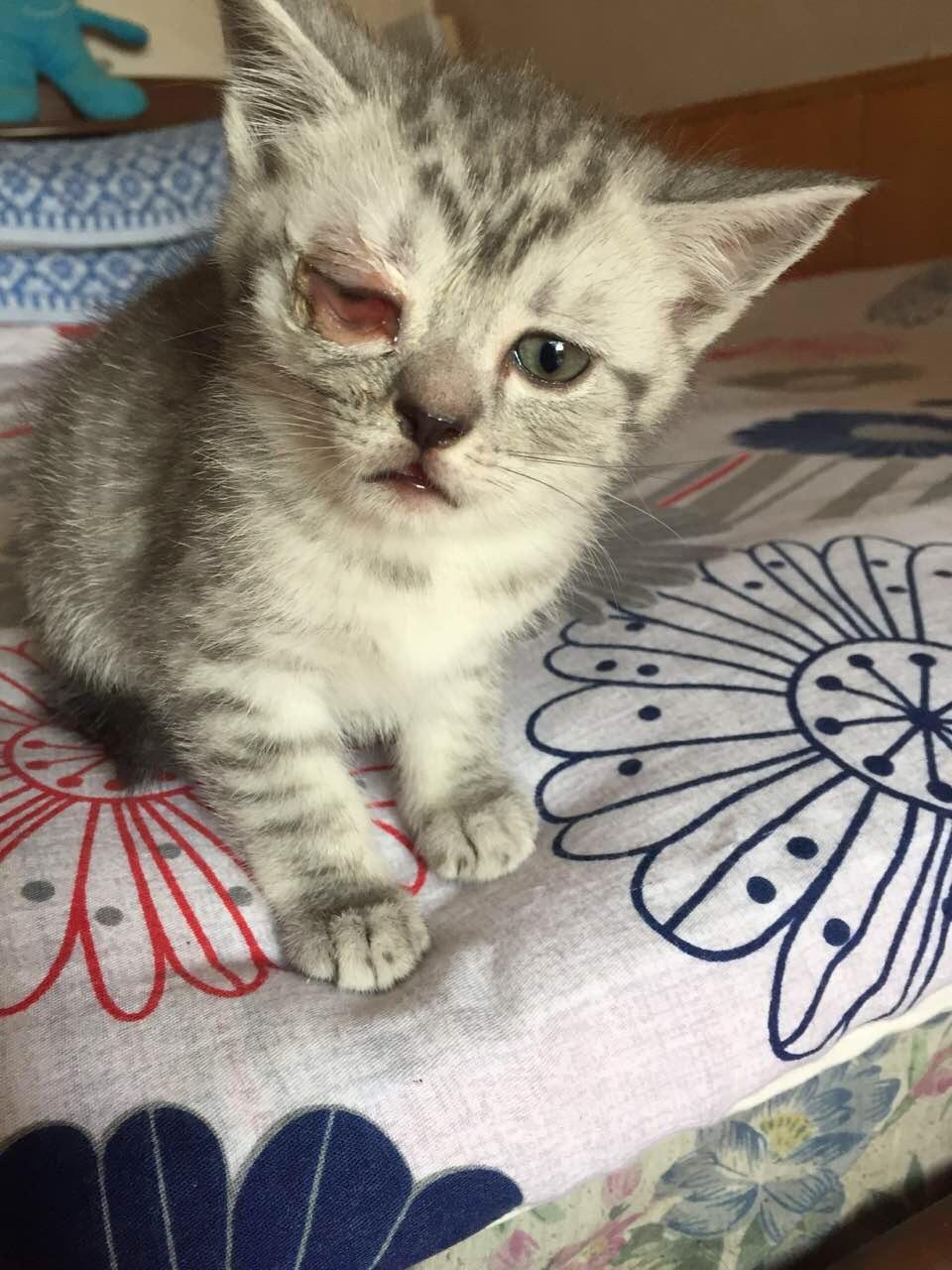 猫猫是不是猫鼻支,怎么治疗