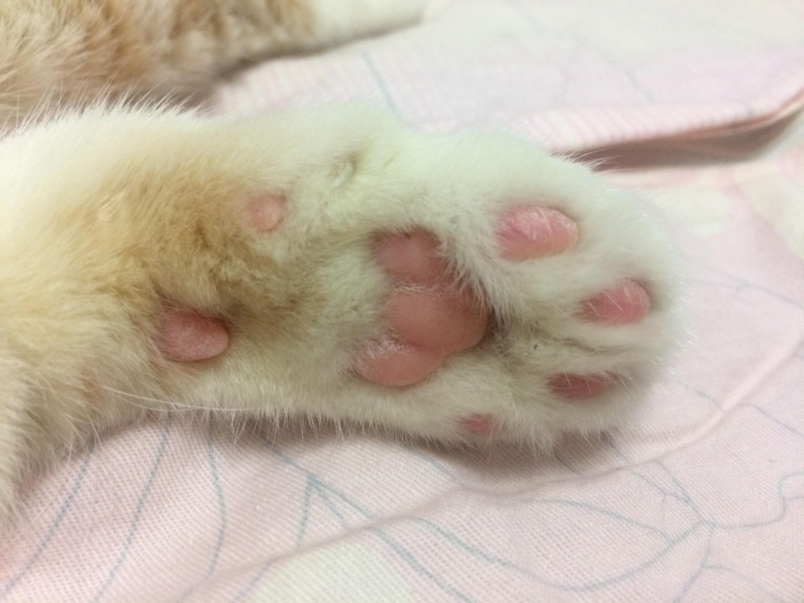 猫猫的爪子特别干燥